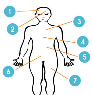 body diagram with numbers